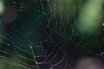 Morning dew. Shining water drops on spiderweb over green forest background.