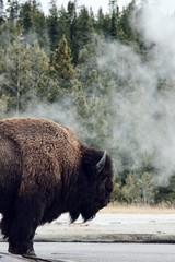 Printed kitchen splashbacks Bison bison portrait in nature