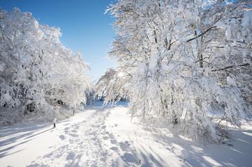 Papiers peints Taupe Paysage d'hiver