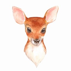 Baby Deer. Hand drawn cute fawn. Watercolor illustration  2