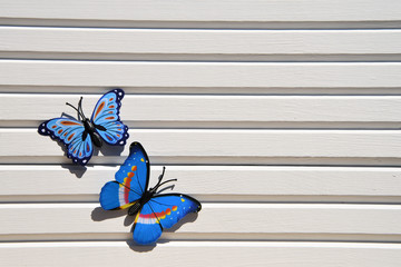 photography image of colourful bright blue fun butterflies in the sunshine on white wood background taken on the South coast of England UK
