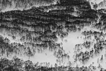 Japan winter forest landscape