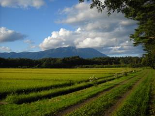 Garden Poster Rice fields 田畑