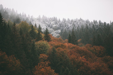 Fototapeten Wald Forest with fog and snow high in the mountains