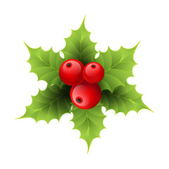 Vector realistic holly Christmas ornament. Holly green leaves and red berries isolated on white background.