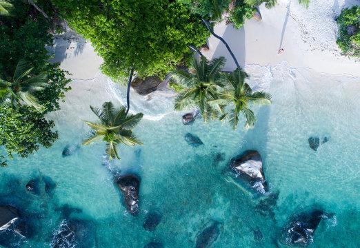 Paradise Lands