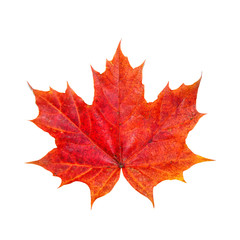Bright maple leaf. The symbol of autumn.