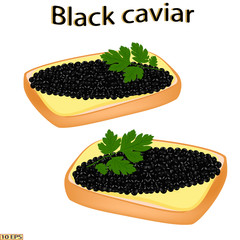 Black caviar. Sandwich with sturgeon caviar isolated on white background.  Vector illustration.
