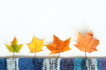 idea autumn landscape/ maple leaves and a blue knitted scarf on a light wooden surface top view