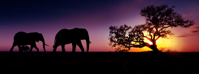 Elephant family sunset silhouette