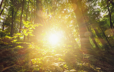sun shines explosiv in to the forest