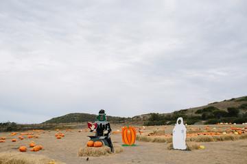 Empty wooden cutouts sit in pumpkin patch