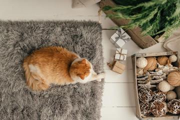 Kitty and Tree