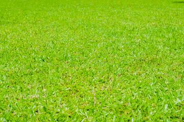 green texture on field.