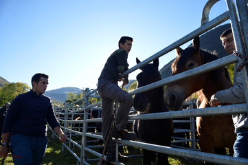 Farmers look after horses at an agricultural fair in Salardu, in the Val d'Aran in Catalonia