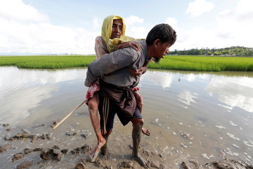 Rohingya refugees walk in a rice field after crossing the border in Palang Khali