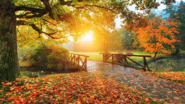 Beautiful autumn scenery in park.