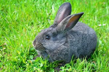 rabbit on green grass background