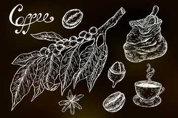 Hand drawn sketch coffee elements. Vector chalkboard illustration: Coffea, coffee tree, coffee beans, bag, coffee cup.