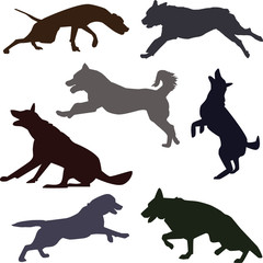 Silhouettes of active dog breeds. Dog sport silhouettes.