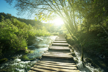 way in forest, Plitvice lakes, Croatia