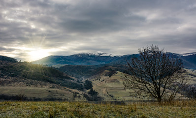 beautiful sunrise over the mountains with snow tops. lonely leafless tree on hillside under overcast autumn sky
