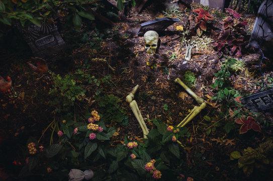 Halloween skeleton in backyard