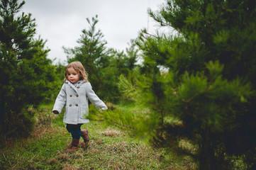 through the christmas trees