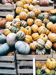 Pumpkins in crates at Borough Market, London