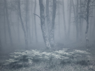 Foggy woods with fernes