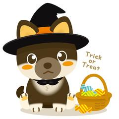 いぬっこ倶楽部 ハロウィン 柴犬(黒)