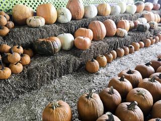 Halloween and Thanksgiving Pumpkins Autumn season, many bright orange at the Farmers Market.
