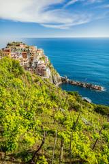 Vineyard near Manarola village in famous Cinque Terre. Liguria, Italy.