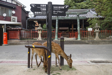 Two deer eating grass under signpost in front of a shrine in Miyajima, Japan
