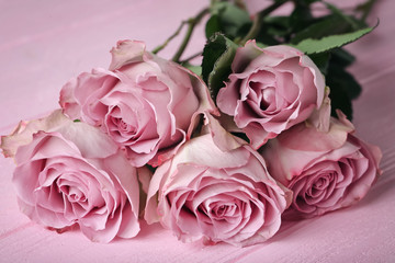 Beautiful pink roses on color background