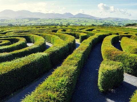 hedge maze against blue sky,Northern Ireland