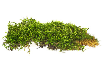 Green moss isolated on white background, closeup