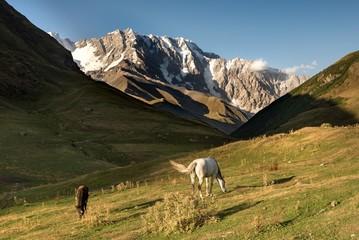 View on Shkara mountain with wild horses, Georgia.
