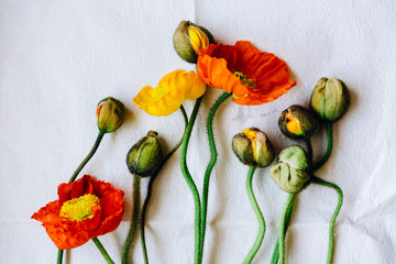 Orange and Yellow poppies on paper