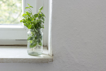 Bunch of mint in a glass on windowsill