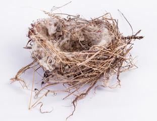 bird nest An empty isolated on white background
