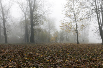 Fog in autumn season