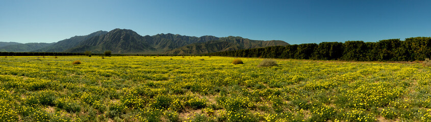 Aluminium Prints Blue jeans Anza Borrego wide mountains and flowers
