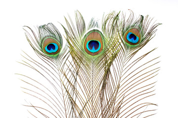 Peacock. Peacock feathers on white background.