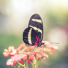 Pink Butterfly in Dreamy Flower Garden