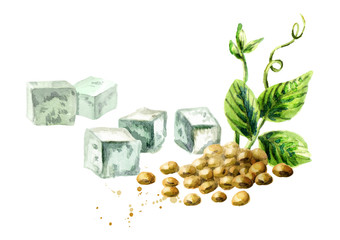 Soy tofu and soybeans with green plant. Watercolor hand drawn illustration.