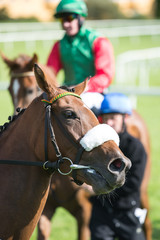 Close-up on a race horse on the track