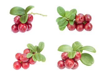 four cowberries - cranberries with big leaves on the white background isolated