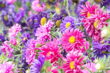 Soft focus blooming colorful flowers in summer