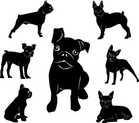 Silhouette of Boston terrier. Adult dogs and puppies.